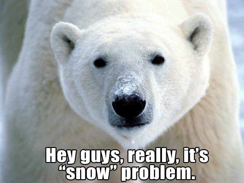 International Polar Bear Day Hysteria Joe Steigerwald The Stag Blog